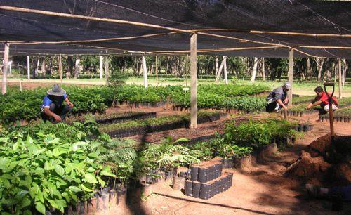 Refopar reforestemos paraguay for Viveros en paraguay