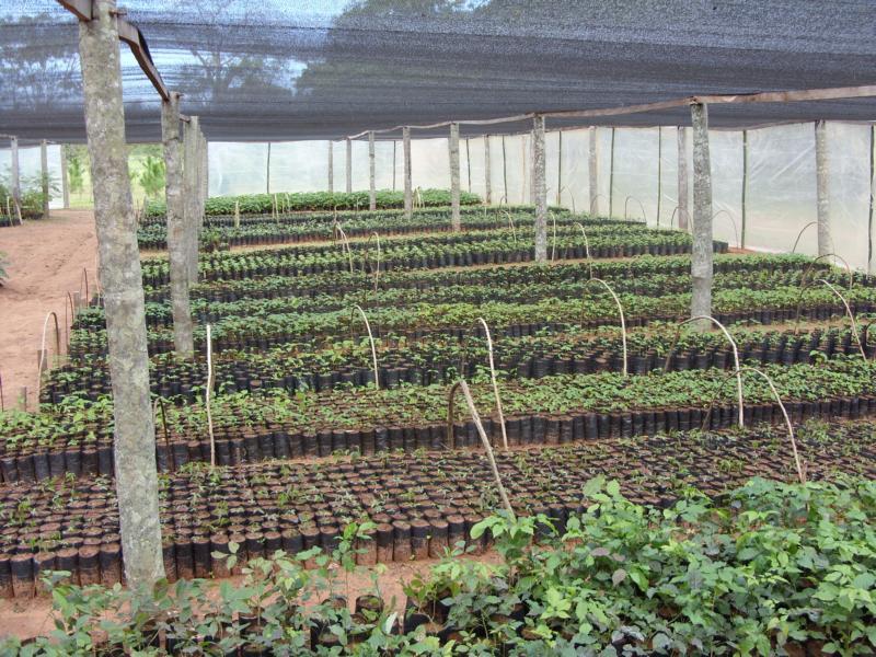 Refopar reforestemos paraguay for Herramientas de un vivero